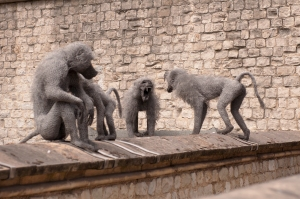 Kendra Haste's fighting Baboons