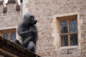 Kendra Haste Baboon sitting on Wall at Tower of London