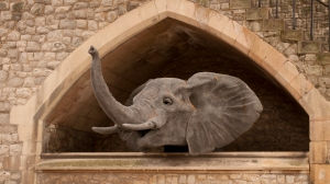 Kendra Haste Elephant peers through an opening in the walls at the Tower of London