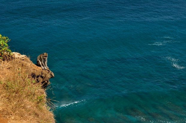 Monkey on Ullawatu cliff