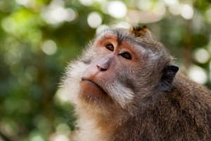 Monkey in Ubud's Monley Forest
