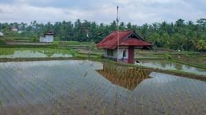 Reflections in Rice Fields Ubud