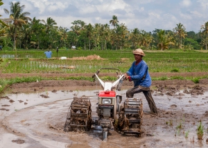 A man ploughs his paddy fields in readiness for the next crop